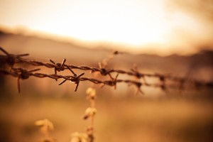 Free- Barbed Wire