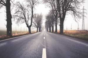 Free- Straight Road with Trees